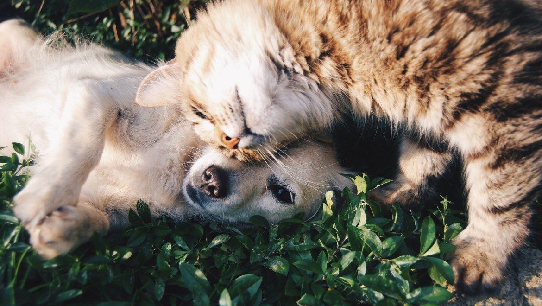 Inkasso – Tierärzte